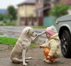 Dog helping a toddler