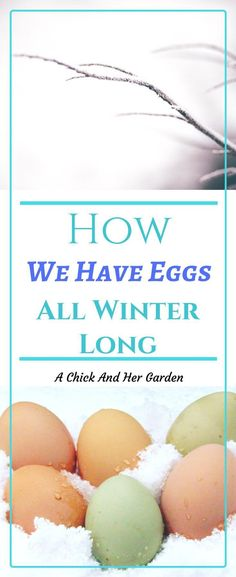 Egg production goes down and sometimes stops in the winter with the shorter days.  Some people like to add lights to the chicken coop to keep up production.  We don't. So how do we have eggs in the winter?