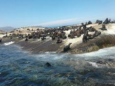 Seal Island South African Wine, Seal, Island, Water, Outdoor, Gripe Water, Outdoors, Islands, Outdoor Games