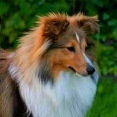 what a gorgeous dog