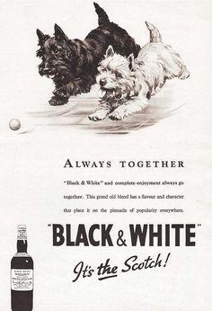 Chiens 'Whisky Black & White' - Publicité Vintage - 1941