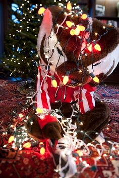 Stringing lights isn't easy with paws... This photo is just one of so many reasons I love Bucky Badger!