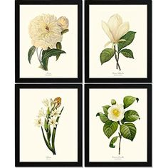 Red Exotic Flowers Victorian Botanical Illustration Art Print Poster 18x12