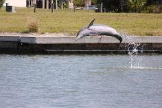 My Money Shot......A dolphin jumping