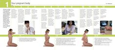 Your body in the first trimester Pregnancy Books, First Trimester, Activities, Pregnancy