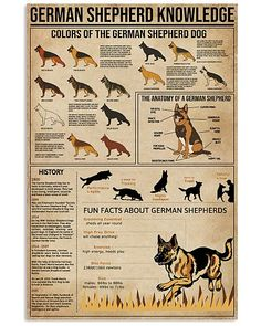 Knowledge German Shepherd shirts, apparel, posters are available at Ateefad Outfits Store. Baby German Shepherds, Shepherd Dog, Animals And Pets, Cute Animals, Dog Care, Dogs And Puppies, Doggies, Big Dogs, Pet Birds
