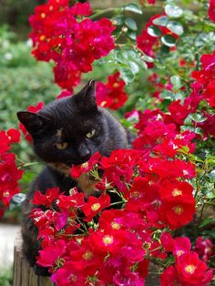 Cats do seem to love smelling flowers. Cute Kitten Gif, Kittens Cutest, Cats And Kittens, Cute Cats, Funny Cats, Smelling Flowers, Curious Cat, Like A Cat, Beautiful Cats