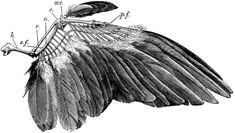 bird wing | Tumblr