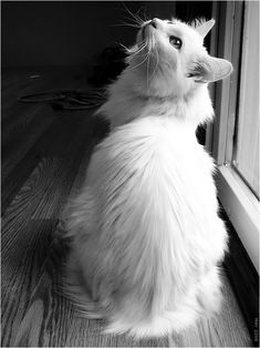 I used to have a cat that looked very much like this one...RIP Casper