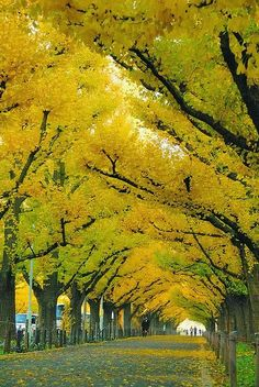 Here's our Mellow yellow photo gallery including pictures of luscious decor, fashion shoes, accessories and nature. Beautiful World, Beautiful Places, Beautiful Pictures, Amazing Places, Trees Beautiful, Inspiring Pictures, Parks, Tree Tunnel, Rainbow Painting