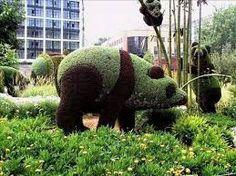 Resultado de imagen para arte topiario plantas