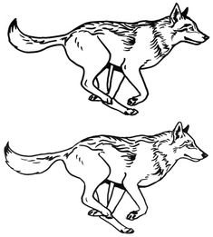You can see round one here: My client went with the one with all the legs tucked under the body. Wolf running sketches, second round Animal Silhouette, Silhouette Art, Wolf Sleeve, Sketchy Tattoo, Lion King Drawings, Lioness Tattoo, Wolf Illustration, Horse Coloring Pages, Wolf Tattoo Design