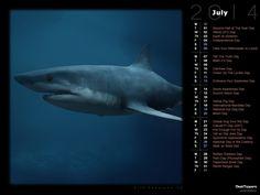 Shark Awareness (Rendered)
