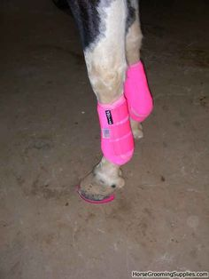 Puff in her pink tack and new pink horse shoes