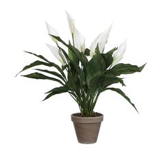 Mica Decorations - spathiphyllum maat in cm: 50 x 40 wit in pot Plants, Decorations, Products, Bad, Decoration, Plant, Decor, Planting, Planets