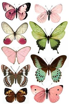 Forums / Images & Graphics / Butterflies - Swirlydoos Monthly Scrapbook Kit Club ideal for butterfly shapes for tatto'd thigh Art Papillon, Butterfly Art, Butterfly Pattern, Butterfly Images, Green Butterfly, Butterfly Painting, Paper Butterflies, Watercolour Butterfly, Butterfly Design