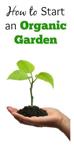 video how to start a vegetable garden from scratch growmethod