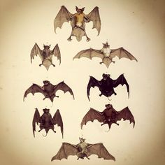 Bats...as simple as that. #spitalfields #taxidermy #oldspitalfields #oldspitalfieldsma... | Use Instagram online! Websta is the Best Instagram Web Viewer!
