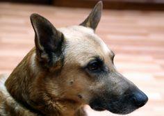 Dog posing.
