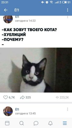 Linkin Park, Satire, Cool Pictures, Laughter, Dog Cat, Comedy, Lol, Deviantart, Memes