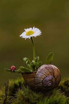 Spring in nature, snail, ladybug, daisy Beautiful Flowers, Beautiful Pictures, Amazing Photos, Fotografia Macro, Macro Photography, Photography Reflector, Photography Flowers, Modern Photography, Photography Awards