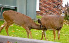 Not right now, deer, we're in public