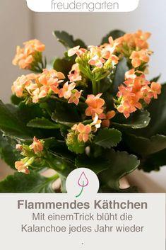 98 Best Blühende Zimmerpflanzen Images In 2019 Chrysanthemum