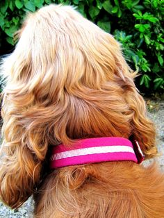 Oscar & Hooch collar and lead review