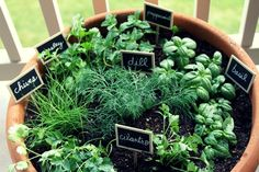 Growing vegetables in apartment right in your abode is not an impossible thing. Are you thinking of planting herbs, tomatoes, and mushrooms?