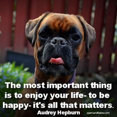 Penny has taught me about the importance of just being happy. Dogs show us how to live in the moment. Boxer Bulldog, Boxer Puppies, Baby Puppies, Boxer And Baby, Boxer Love, I Love Dogs, Puppy Love, Boxer Quotes, Puppy Stages