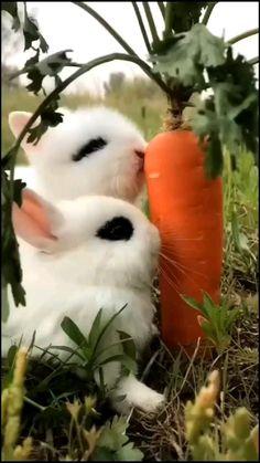 Cute Wild Animals, Baby Animals Super Cute, Baby Animals Pictures, Cute Animal Videos, Cute Little Animals, Cute Animal Pictures, Cute Funny Animals, Animals Beautiful, Beautiful Cats