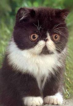 Don't look so worried little kitty!