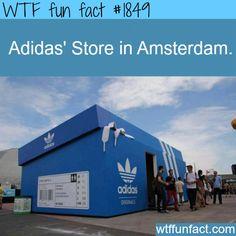 Adidas Store in Amsterdam -WTF fun facts jk guys, It's Shaq's Shoe Box.