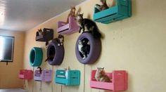 Caixotes de madeira e pneus criam ambiente felino