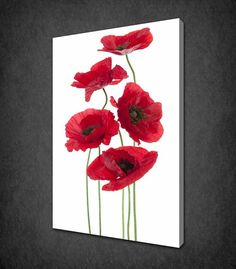 RED POPPIES FLOWERS ISOLATED CANVAS PRINT PICTURE WALL HANGING ART FREE UK P&P