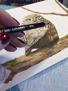 I M Using Derwent Inktense And Some Reall Tiny Brushes A Bird