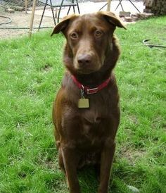 Remi.  I've been waiting a long, long time for my forever home.  When I was 5 weeks old my brother and I came here from the Red Lake Indian Reservation. I was born in mid April 2007.  I'm housetrained and crate trained.
