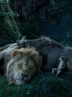 """Can you feel the fright tonight? A poster featuring Pumbaa in the new """"Lion King"""" live-action film is here, and fans aren't too sure. Lion King Musical, Lion King Movie, Lion King Art, Lion King Quotes, Watch The Lion King, Roi Lion Simba, Simba And Nala, Le Roi Lion Disney, Animal Illustrations"""