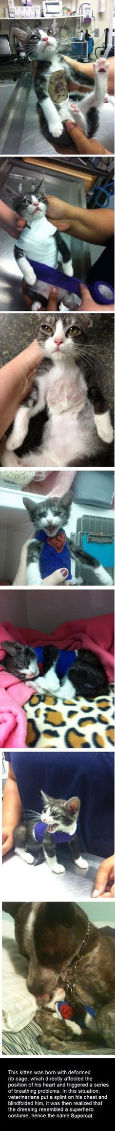 It's a bird… It's a plane… It's Supercat!