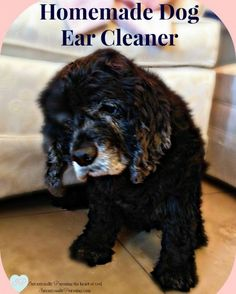 For today's Frugal Friday, I'm going to share the homemade dog ear cleaner recipe I use and the steps I take to clean Daisy's ears. I've gotten so practiced at