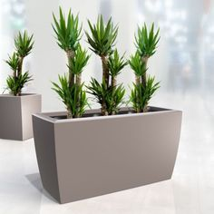 Gallery of Containers for Plant Hire - Transplant Indoor Plant Hire Inside Garden, Green Office, Eco Green, Office Plants, Balcony Garden, Container Plants, Indoor Plants, Planter Pots, Roof Terraces