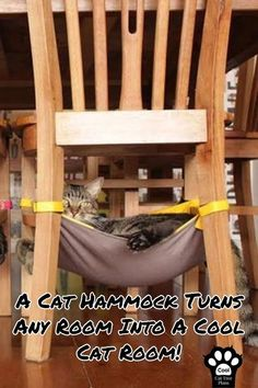 "Pet Accessories - A Cat Hammock Turns Any Room Into A Cool Cat Room! Click the image to discover more cool cat stuff! # Pets care accessories Cat Room Ideas Every ""Crazy Cat Lady"" Wants To Get Her Hands On - Cool Cat Tree Plans Crazy Cat Lady, Crazy Cats, Cat Tree Plans, Cool Cat Trees, Cat Shelves, Cat Playground, Cat Room, Cat Accessories, Outdoor Dog"