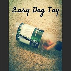 Easy Dog Toy: place a few dog treats in a large water bottle. Will keep your dogs entertained for a while. And they will love it.