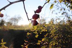 Autumn, Fruit, Food, Fall Season, Essen, Fall, Meals, Yemek, Eten