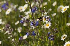 0942 http://www.kurtjohnsonphotography.com/