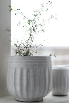love this pot from Tine K, the flower is called sophora