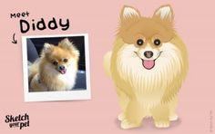 Meet Diddy the Pomeranian #petportrait #art #illustration #petsketch #dogsketch #dogs #pencilsketch #Pomeranian