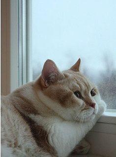 pondering puss