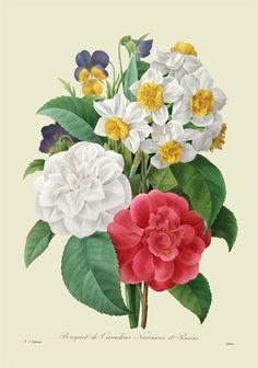 「ルドゥーテ 美 花 選」の画像検索結果