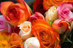 Wedding Ideas about Rose centerpieces for a glamorous wedding, Wedding Flowers Phoenix, Phoenix Weddings & Wedding Planner Florist, Wedding Flowers. Yellow Envelopes, Fragrant Roses, Types Of Roses, Rose Centerpieces, Food Dye, Growing Roses, Glamorous Wedding, Beautiful Roses, Beautiful Things